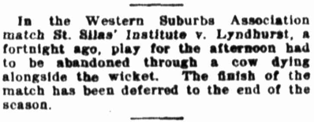 Macdonaldtown Erskineville - Cricket abandoned - cow dying alongside wicket.png