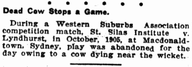 Dead Cow Stops a Game 1913.png
