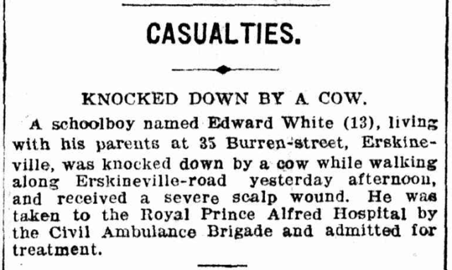 Erskineville - knocked down by a cow - 1904.png